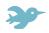 Itty Bird icon