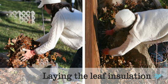 laying-the-leaf-insulation