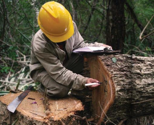 fsc-wood2