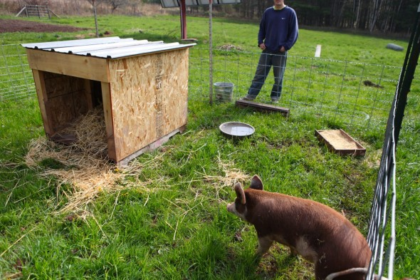 how to start a pig farm
